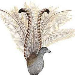 sandwicherie-l-oiseau-lyre-auderghem-0-logo