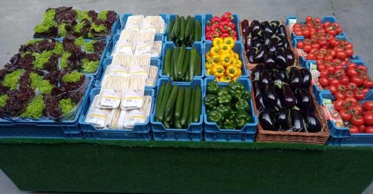 maraicher-legumes-le-panier-des-collines-leuze-en-hainaut-5