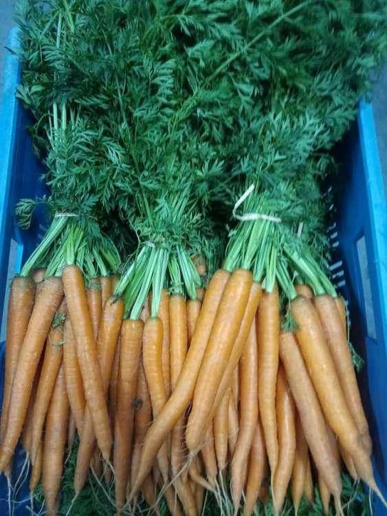 maraicher-legumes-le-panier-des-collines-leuze-en-hainaut-6