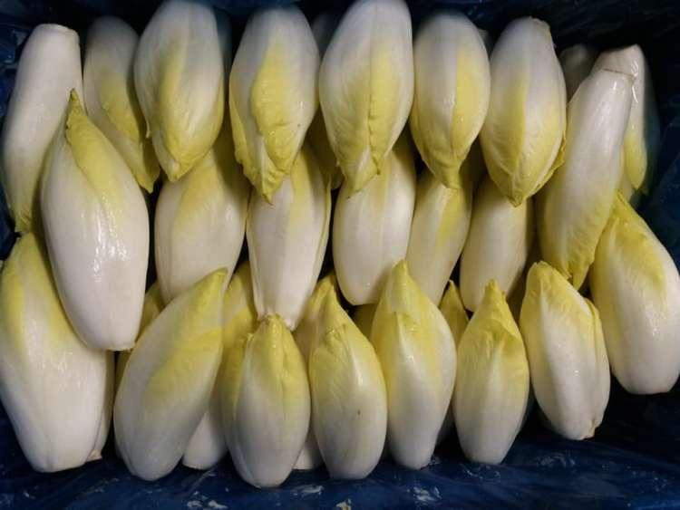 maraicher-legumes-le-panier-des-collines-leuze-en-hainaut-7
