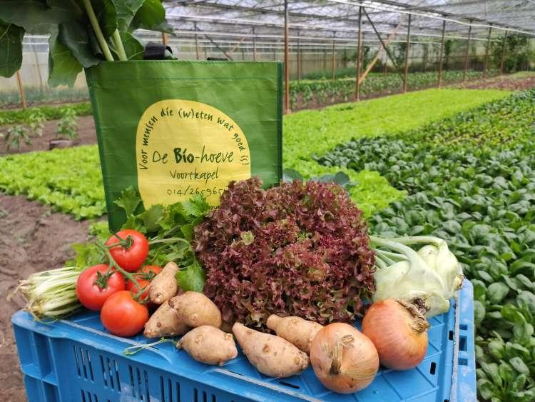 maraicher-legumes-de-bio-hoeve-westerlo-4